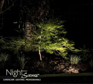 A 4 watt LED fixture is perfect for this small Japanese Maple tree